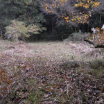 ⑦番湿地回復予定地作業済