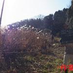 写真1 谷戸上流側から見た作業前風景