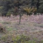 ⑥番湿回復予定地 中央にマユミの木