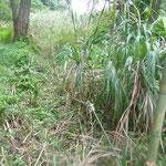 3番湿地作業途中