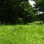 谷戸奥は低茎湿地になっている