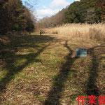 写真3 谷戸下流側から見た作業後風景