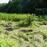 5番湿地回復予定地