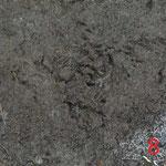 アライグマの爪跡
