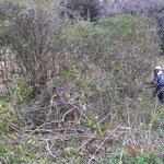 灌木伐採作業