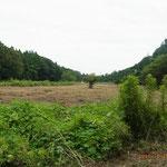 8月24日 谷戸埋立地先端まで草刈り完了