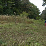 写真5 6番湿地改善予定地