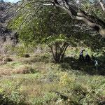谷戸内ヤマグワの木陰で休憩
