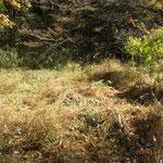 一部、野鳥の餌場、隠れ場用に刈り残す