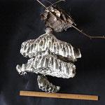 コガタスズメバチの巣 外皮を剥いだ (A)