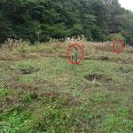 写真6  手前5番、奥6番湿地改善予定地
