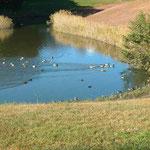 ガリバー池