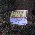 木の根元の地上に落下している看板