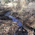 流れの藪を刈り払う