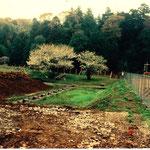谷戸左岸沿いの山桜がある所から埋立開始 右側旧グラウンド