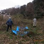 伐採された枝の搬出