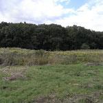 写真7 現在の風景