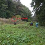 写真3 6番湿地改善予定知
