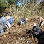 希少植物生育地環境整備作業
