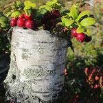 lingonberries found a birch vase