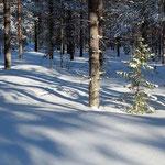 pure snow...