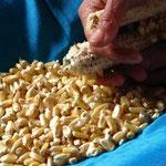 Desgranando maiz, lo mismo que hace 2000 años