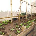 El interior del túnel: Comida orgánica de la mejor calidad