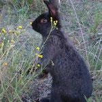 Conejos sueltos por el huerto