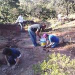 Plantando los pinitos con los amigos