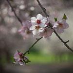 Blossom 4, 02-2013