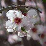 Blossom 3,02-2013