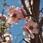 Blossom 1, 02-2013