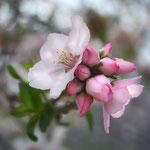 Blossom 2, 02-2013