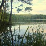 Badestelle Großer Trepliner See