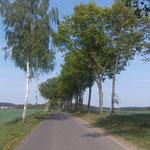 Wunderbare Fahrradwege