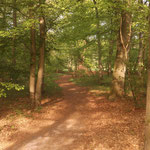 Der Wald von seiner schönsten Seite.