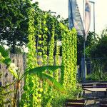 kleiner Hopfengarten