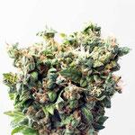 Cannabis Sorte 3