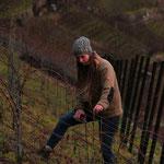 Antje Galle beim sanften Rebschnitt im Weinberg von Galle und Rausch