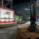 神奈川県立生命の星・地球博物館生命展示室