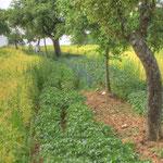 Ortoland Lebensraum: Kleinstrukturierter Landbau mit offenen Bodenflächen