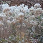 Komt u deze winter zelf de tuin van Bij Truus bekijken?