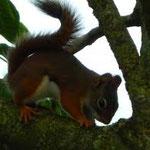 Deze dieren komen zelfs heel dicht bij. Bij Truus verjagen we de eekhoorns niet