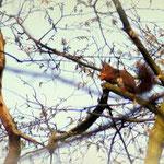 Het is een genot om naar de eekhoorntjes te kijken Bij Truus