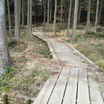 絆の森整備事業(大野町)