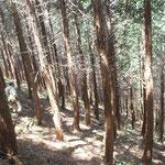 踏査調査(毎木調査)