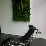 fauteuil Le Corbusier - tableau végétal stabilisé