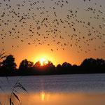 Sonnenuntergang am Mechower See
