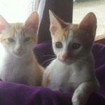 Lina & Lexi - endlich im eigenen Happy Home angekommen