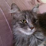 Lua lebt seit Ende September in Hockenheim